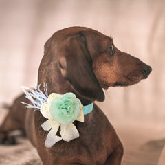 Mint Flower dog collar, Handmade flower leather collar, Dog of honor proposal, S to XXL collar , Wedding dog collar, lace flower collar