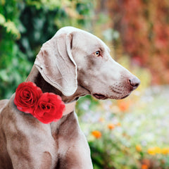 Red Flower dog collar, Handmade flower leather collar, Dog of honor proposal XS to XXL collar, Puppy Girl flower collar