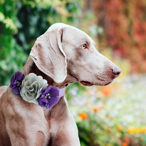 Gray purple Flower dog collar, Handmade flower leather collar, Dog of honor proposal XS to XXL collar, Puppy Girl flower collar , Wedding dog collar