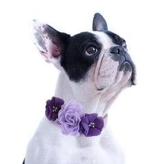 Handmade Lilac purple Flower dog collar, flower leather collar, Dog of honor proposal XS to XXL collar, Puppy Girl flower collar