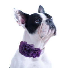 Handmade Purple Flower dog collar, flower leather collar, Dog of honor proposal XS to XXL collar, Puppy Girl flower collar