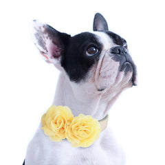 Yellow Flower dog collar, Handmade flower leather collar, Dog of honor proposal XS to XXL collar, Puppy Girl flower collar
