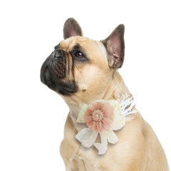 Champagne Ivory Flower dog collar, Handmade Pearl feather flower leather collar, Dog of honor proposal or every day use, S to XXL collar , Wedding dog collar