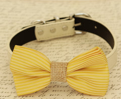 Gold dog bow tie, Bow tie attached to dog collar, Pet wedding accessory, dog birthday gift, Dog collar, Gold wedding idea,Burlap, dog collar - LA Dog Store  - 1
