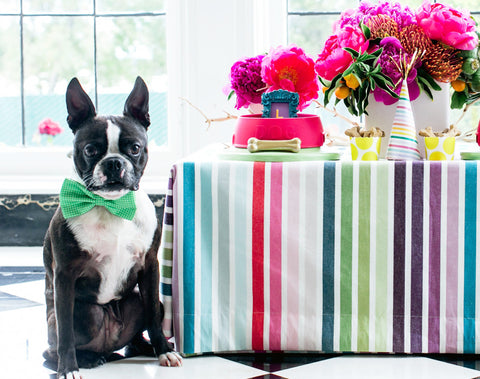 Green Dog Bow Tie attached to collar, Spring wedding