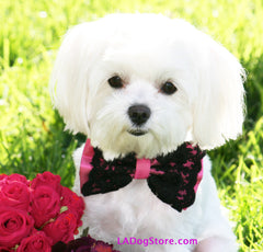 Hot Pink dog Bow Tie, Hot Pink Bow with Black Lace, Pet accessory, Dog Lovers, Dog Birthday Gift, Sexy - LA Dog Store  - 1