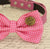 Hot Pink Dog Bow tie, Bow attached to dog collar,I love you, Dog birthday gift, Pet wedding accessory, Polka dots bow, Pink lovers, Proposal - LA Dog Store  - 3