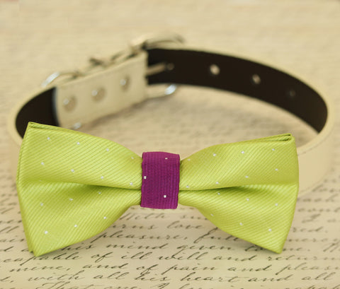 Lime Green dog bow tie attached to dog collar, Green and violet wedding