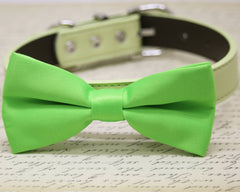 Lime Green dog bow tie attached to collar, Green wedding, Lime Summer wedding