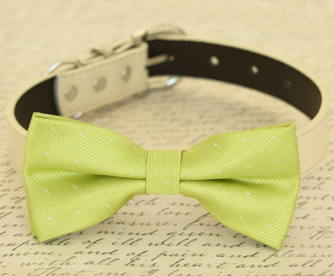 Lime Green dog bow tie attached to dog collar, Pet wedding accessory