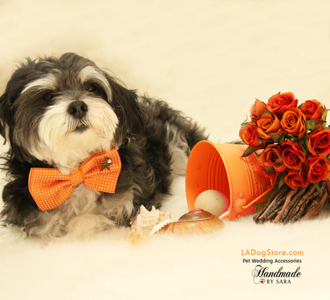 Orange Dog Bow tie attached to collar, beach, birthday gift, wedding accessory