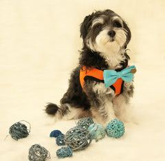 Dog Harness, Bow attached to dog harness, Blue bow with a charm, Live, Love, Laugh, Dog Harness and Bow tie, Dog lovers, Dog birthday gift - LA Dog Store  - 1