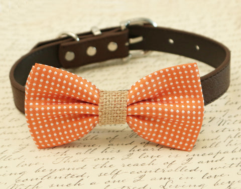 Orange Dog Bow tie attached to collar, Burlap wedding, pet wedding accessory