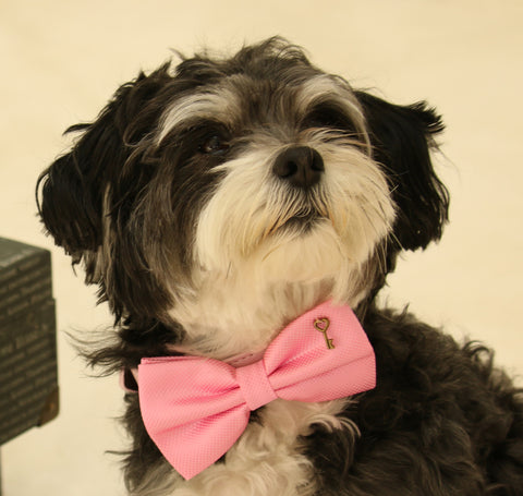 Pink Dog Bow Tie collar, Bow tie attached to dog collar, Pet accessory , Wedding dog collar