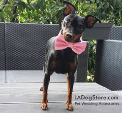 Pink Dog Bow tie, Pink bow attached to pink collar, Pink dog accessory, wedding dog collar, dog birthday gift, dog lovers, Pink - LA Dog Store  - 1