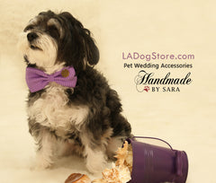 Purple Dog Bow Tie collar, bow attached to Black, brown, Ivory, Pink or White collar, Purple wedding accessory, dog birthday gift, dog lover - LA Dog Store  - 1