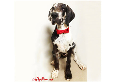 Red Dog Bow Tie with leather collar, Red wedding ideas, Pet wedding accessory