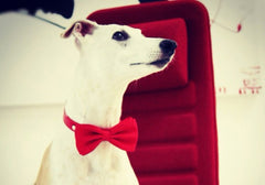 Red wedding dog collar, Valentine's Day Accessory, Red Dog Bow Tie with high quality Red leather collar,Christmas gift - LA Dog Store  - 1