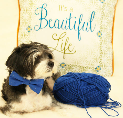 Royal Blue dog bow tie attached to collar, Pet wedding accessory, Dog lovers , Wedding dog collar
