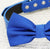 Royal blue dog Bow tie,Bow attached to blue dog collar, pet wedding accessory, birthday gift, some thing blue, dog accessory, Beach wedding - LA Dog Store  - 2