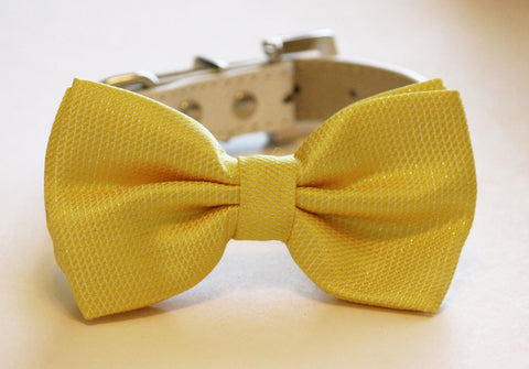 Sunny Yellow Wedding Dog Bow Tie with collar, yellow wedding, birthday