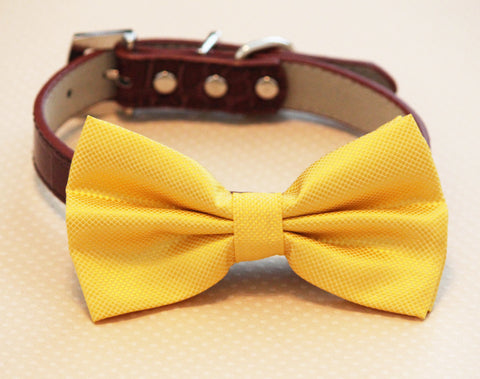 Yellow dog bow tie attached to collar, Pet Wedding, Dog Lovers