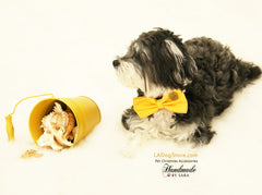 Yellow Dog Bow Tie collar attached to collar, Pet wedding accessory, Dog collar