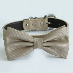 Champagne bow tie collar, handmade Puppy bow tie, XS to XXL collar and bow adjustable dog of honor ring bearer
