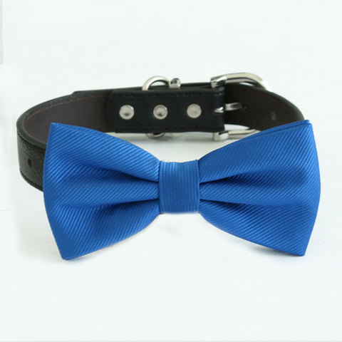 Royal blue bow tie collar, handmade Puppy bow tie, XS to XXL collar and bow adjustable dog of honor ring bearer, High quality bow tie