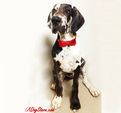Red Red Dog Bow Tie  with high quality Red leather collar, - LA Dog Store  - 1