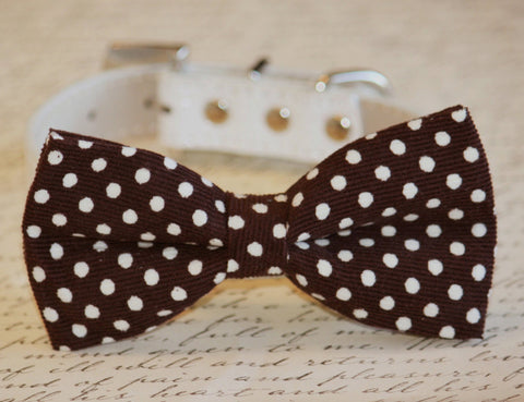 Brown Polka Dots bow tie attached to leather dog collar