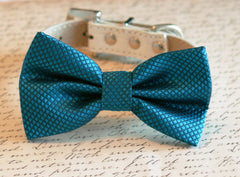 Royal Blue bow tie attached to leather dog collar, Chic Dog Bow tie, Pet Wedding Accessories, 2014 Wedding Accessories - LA Dog Store  - 1