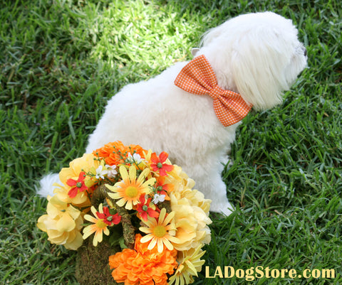 Orange Dog bow tie, Dog Birthday Gift, Summer wedding, Orange wedding