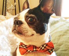 Plaid Orange and Black Dog Bow tie attached to Black leather collar, cute Dog Bow tie, Dog lovers - LA Dog Store  - 1