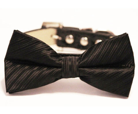 Black Bow Tie attached to leather dog collar- Pet wedding accessory
