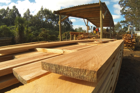 Suppliers of sustainable naturally regenerating New Zealand totara timber - NZ Totara, contact us