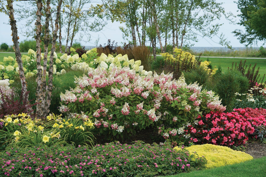 Best Hydrangeas for Pollinators