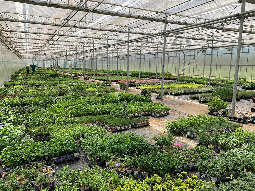 Our greenhouse, full of plants for gardeners who order online