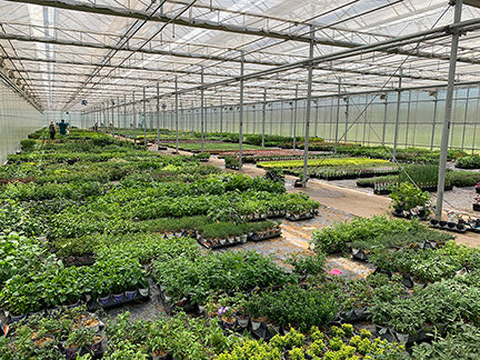 Inside our greenhouses. Many potted plants can be seen.