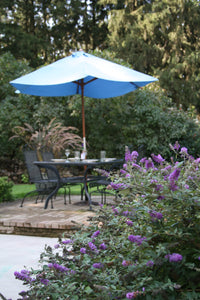 Lo and behold blue chip butterfly bush blooms in a landscape with a patio table in the background