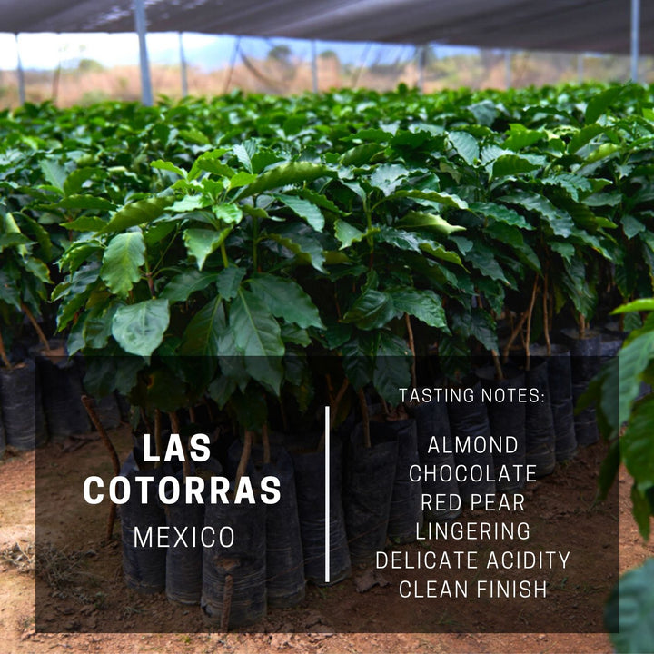 Mexico Las Cotorras (subscription)
