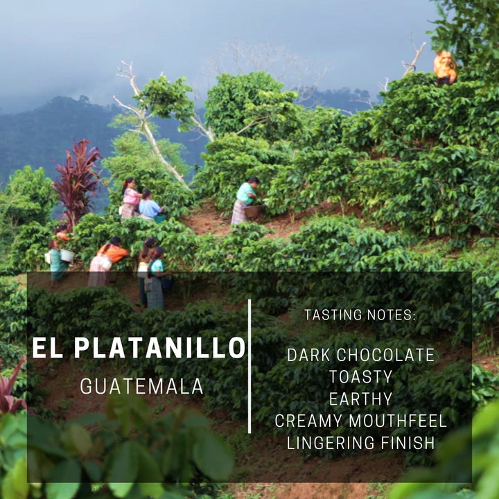 Guatemala El Platanillo (Subscription)