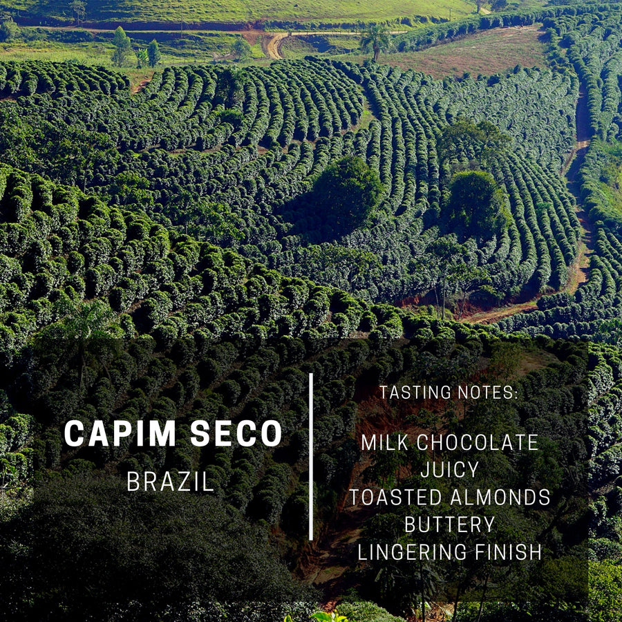 Brazil Capim Seco (Subscription)