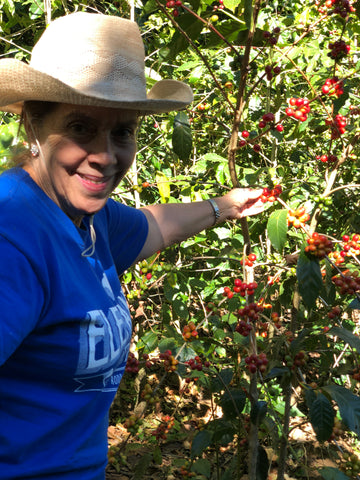 Gloria an Red Caturra at the Roma lot of Finca Nejapa.