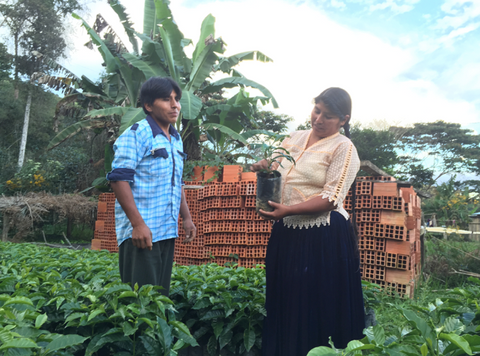 Nicolas and Maruja Colque Drop Coffee Bolivia