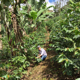Las Delicias, Washed Longberry, Nicaragua