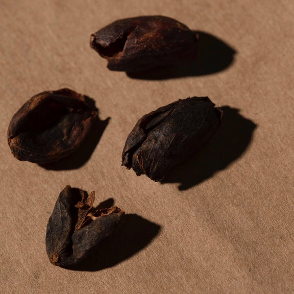 "Organic Cascara, ""Coffee Cherry"", Bolivia"