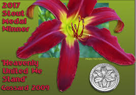 Heavenly United We Stand - Strictly Daylilies