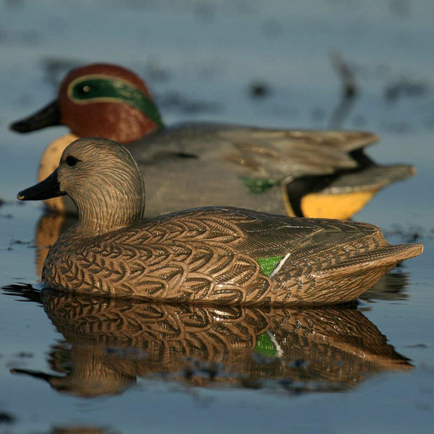 Avery Life Sized Green Winged Teal in water