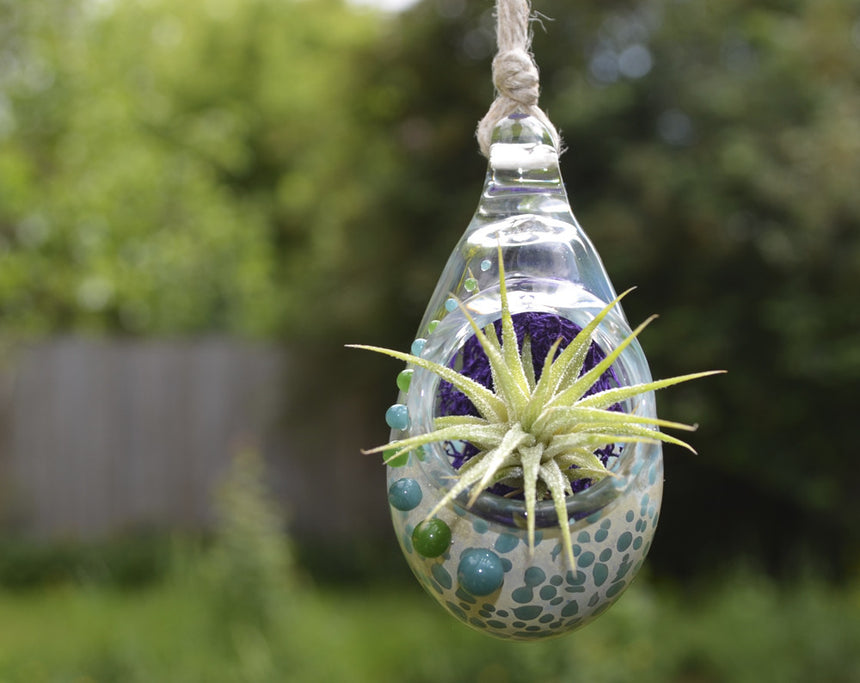 Air Plant Terrarium Pendant Fancy + Teal
